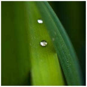 A Little Drop