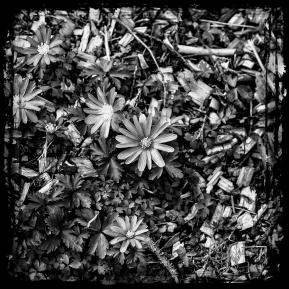Made in Black & White